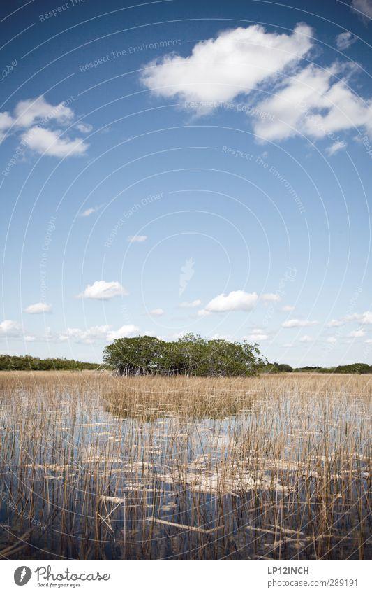 9 Mile Pond II. XXXXV Ferien & Urlaub & Reisen Tourismus Ausflug Abenteuer Ferne Umwelt Natur Landschaft Pflanze Tier Wasser Wolken Fluss Everglades NP Florida