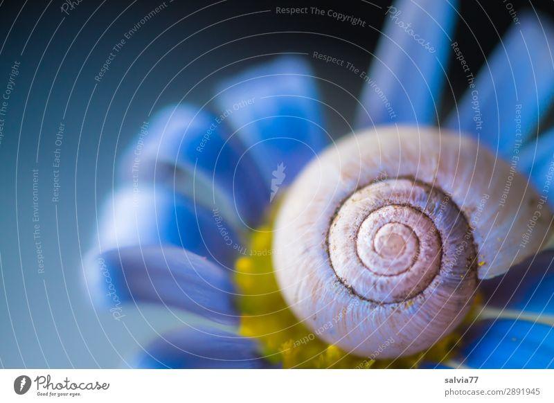 Schneckenhaus in blau Umwelt Natur Frühling Sommer Blume Blüte Garten Tier ästhetisch natürlich positiv Duft Kunst Schutz Symmetrie Strukturen & Formen Spirale