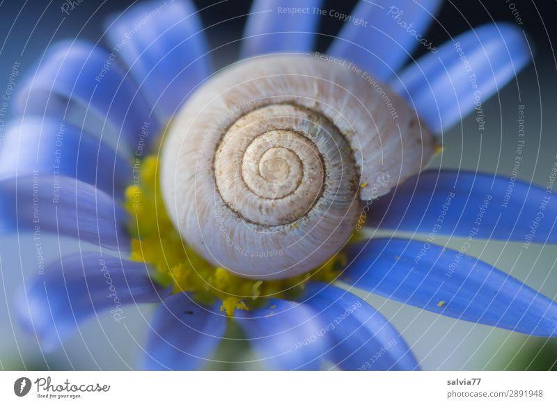 Schneckenhaus Umwelt Natur Blume Blüte Garten Tier 1 Blühend Duft positiv rund blau ästhetisch Symmetrie Vergänglichkeit Spirale Strukturen & Formen Farbfoto