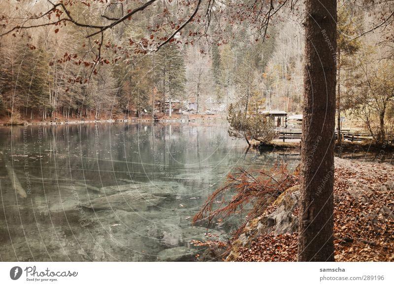 Blausee Ferien & Urlaub & Reisen Tourismus Ausflug Umwelt Natur Landschaft Wasser Wald Seeufer Teich dunkel Flüssigkeit nass natürlich wild Naturschutzgebiet