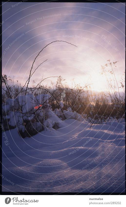 Winter ganz nah Natur Pflanze Tier Umwelt kalt Schnee Garten Schneefall Stimmung Kunst Eis natürlich Park glänzend Freizeit & Hobby