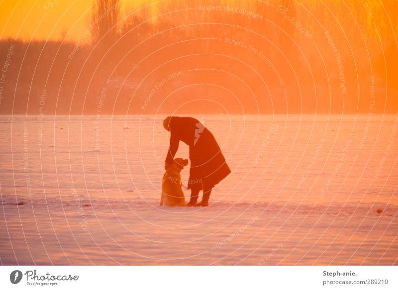 . Mensch Frau Erwachsene 1 Landschaft Sonnenaufgang Sonnenuntergang Sonnenlicht Winter Schönes Wetter Schnee Wiese Feld Mantel Hund Tier berühren leuchten