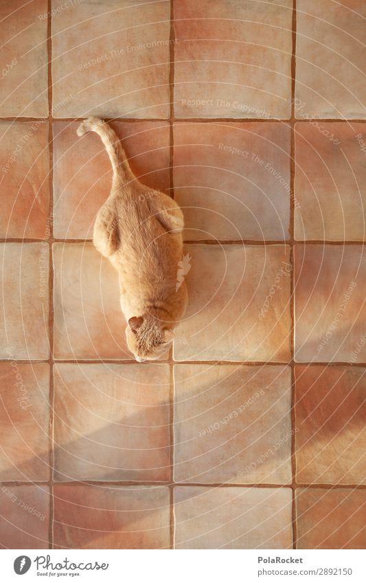 #A# Ich Hab Zeit Lifestyle ästhetisch Katze Hauskatze Katzenkopf Katzenpfote Katzenfreund sitzen warten Boden hocken hockend Farbfoto Gedeckte Farben