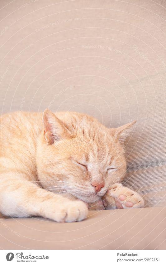 #A# chill out Lifestyle ästhetisch Katze Hauskatze Katzenkopf Katzenpfote Katzenfreund schlafen Erholung liegen Tier Farbfoto Gedeckte Farben Außenaufnahme