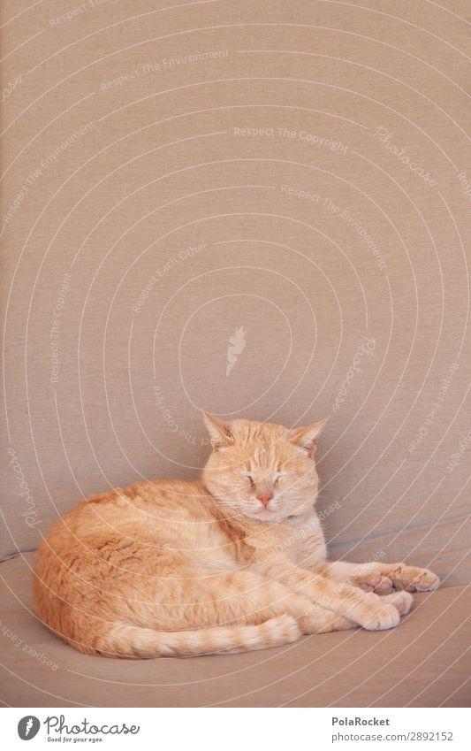 #A# chill-out-area Lifestyle ästhetisch Katze Hauskatze Katzenkopf Katzenpfote Katzenfreund Erholung schlafen verträumt träumen Farbfoto Gedeckte Farben