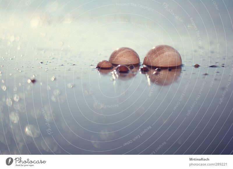 panic and the should attacks. Umwelt Natur Landschaft Wasser Wassertropfen Sonne Frühling Sommer Pflanze Küste Seeufer Flussufer Moor Sumpf Teich Bach Klima