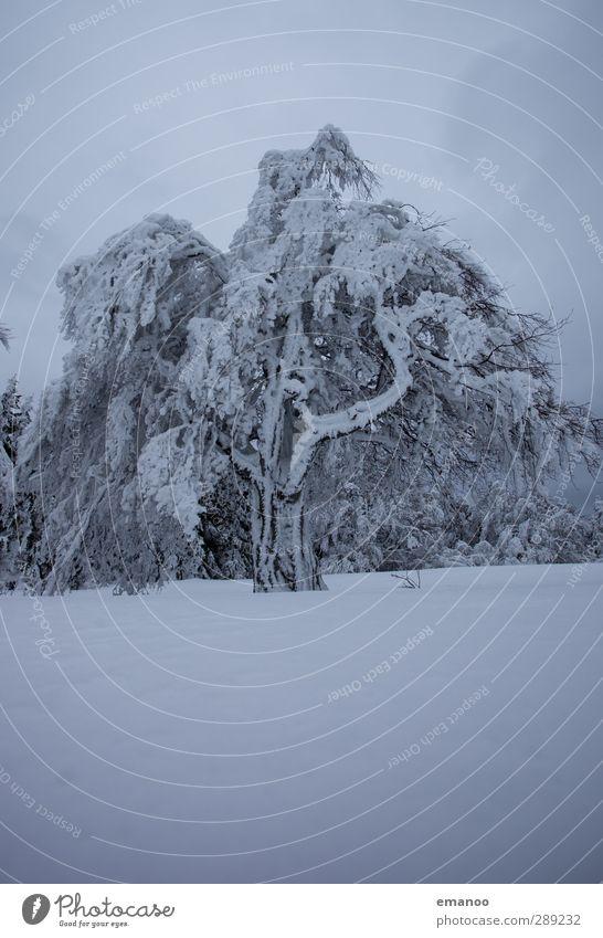 angepustet Natur Pflanze Baum Winter Landschaft Wald Umwelt Berge u. Gebirge kalt Schnee grau Schneefall Eis Wetter Wind Klima