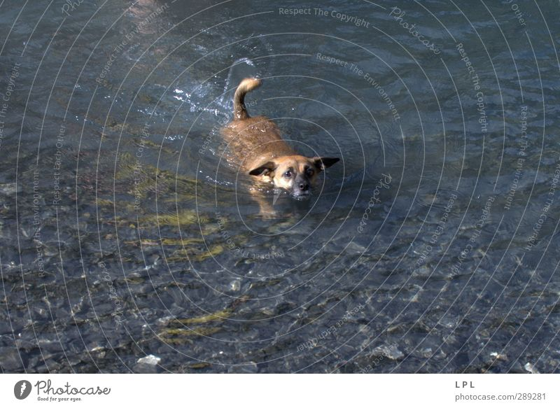 swimming dog reaches shore Berge u. Gebirge wandern Umwelt Natur Wasser See Tier Haustier Hund Tiergesicht Fell 1 Bewegung Schwimmen & Baden lustig nass