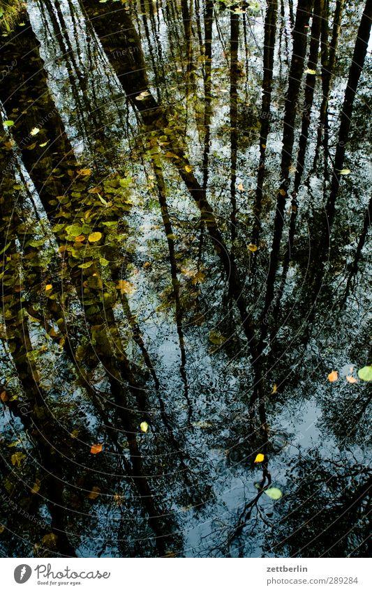 Briesetal Umwelt Natur Landschaft Pflanze Wasser Sommer Klima Klimawandel Wetter Schönes Wetter Baum Grünpflanze Wildpflanze Wald Urwald Moor Sumpf Teich