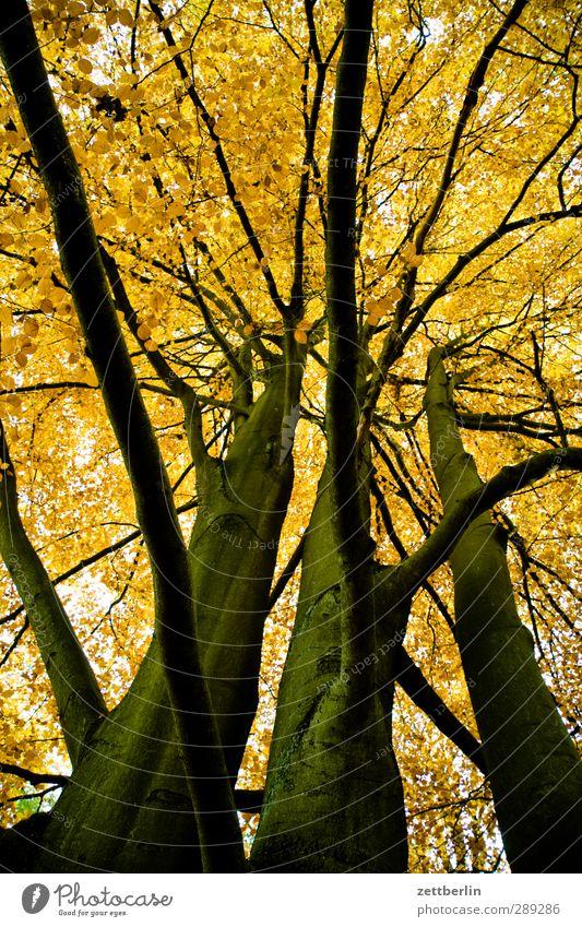 Ein Herbstfoto kann man immer mal gebrauchen. Umwelt Natur Landschaft Pflanze Klima Klimawandel Wetter Baum Blatt Wildpflanze Park Wald gut schön Gelassenheit
