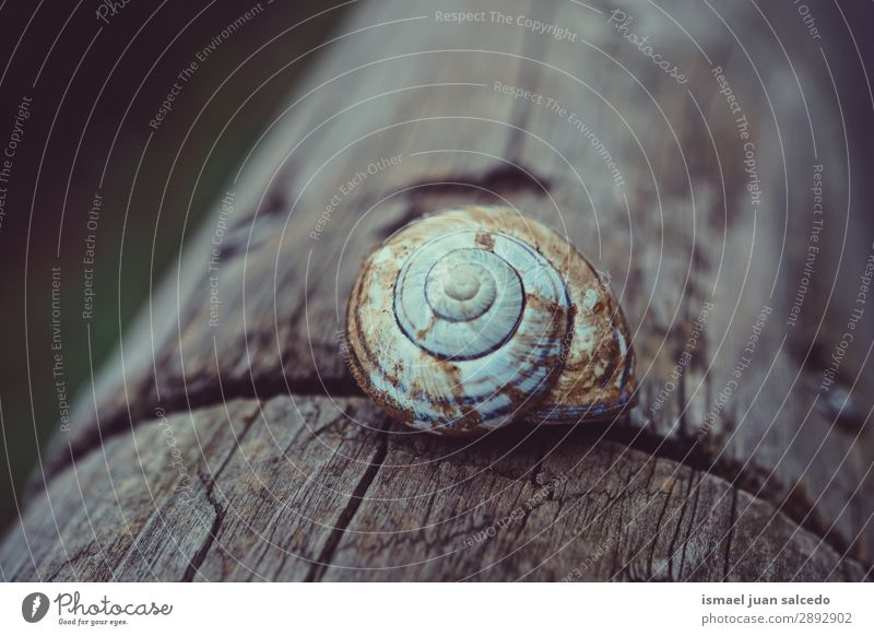 Schnecke auf dem Stamm Riesenglanzschnecke Tier Wanze weiß Insekt klein Panzer Spirale Natur Pflanze Garten Außenaufnahme zerbrechlich niedlich Beautyfotografie