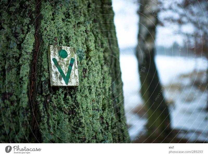 Baumzeichen Jagd wandern Landwirtschaft Forstwirtschaft Natur Winter Schnee Wald Wendland Wege & Pfade Zeichen Schilder & Markierungen grün weiß nachhaltig