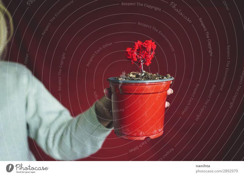 Junge Frau hält einen kleinen roten Baum. Design Mensch Erwachsene Arme Kunst Umwelt Natur Pflanze Herbst Wachstum authentisch einzigartig nachhaltig Schutz