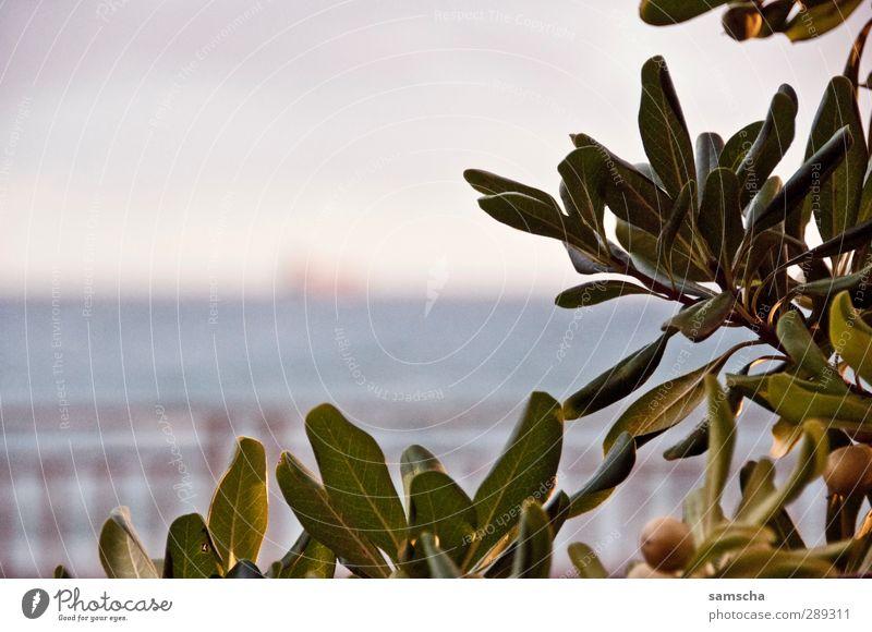 draussen auf See II Himmel Natur grün Wasser Pflanze Meer Blatt Wolken Landschaft Umwelt Küste Park wild Sträucher beobachten Industrie