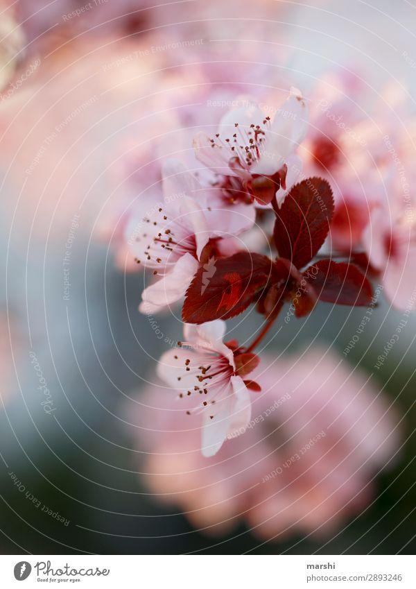 Feels like spring Natur Pflanze Blume Blüte Frühling rosa springen Blühend zart Blütenblatt Frühlingsgefühle Blütenkette