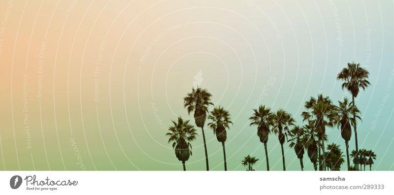 Palmenstrand Himmel Natur Ferien & Urlaub & Reisen Pflanze schön Sommer Baum Meer Landschaft Freude Ferne Umwelt Küste Freiheit Tourismus genießen