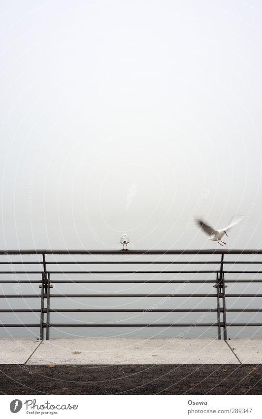 Nebelmöwen Stadt Tier Vogel fliegen sitzen Beton Flügel Geländer Möwe Stahl Brückengeländer Kies Landen horizontal Promenade