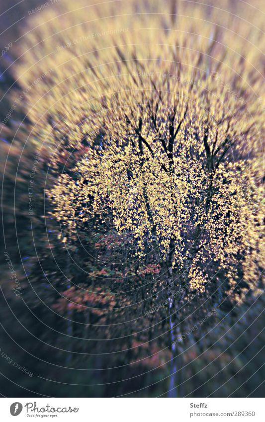 Naturimpression Umwelt Pflanze Herbst Baum Blatt Birke Birkenblätter Ast Zweig Wald Herbstwald Waldrand schön gelb Waldstimmung Novemberstimmung Herbstgefühle
