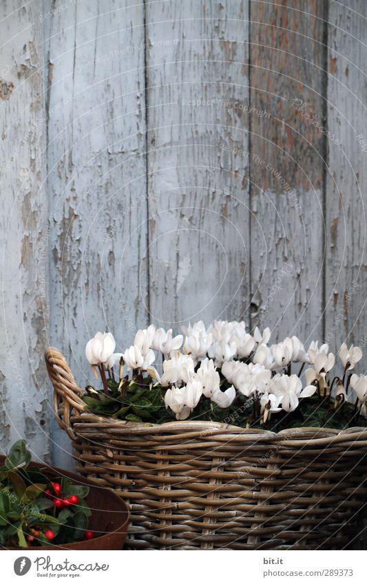 Notfall-Ecke Weihnachten & Advent blau alt weiß Pflanze Blume Wand Herbst Anti-Weihnachten Holz Mauer Feste & Feiern Garten braun Tür Häusliches Leben