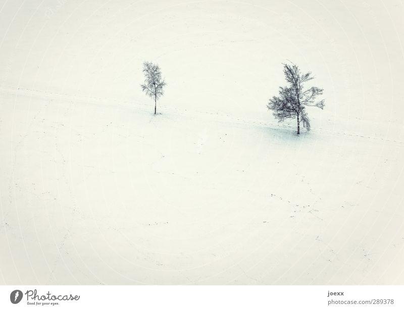 Nachwuchs Landschaft Winter Eis Frost Schnee Baum Feld hell kalt gelb schwarz weiß Partnerschaft Idylle Umwelt Wege & Pfade Farbfoto Gedeckte Farben