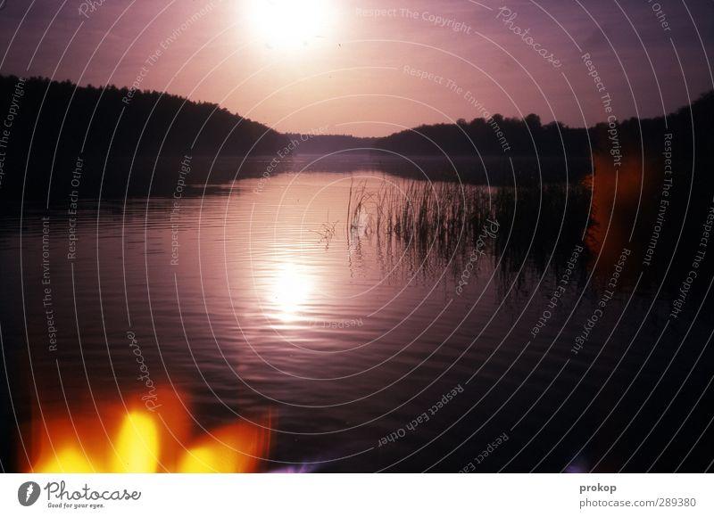 Aurora Kameralis Umwelt Natur Landschaft Pflanze Wasser Himmel Sonne Schönes Wetter Baum Wildpflanze Wald Küste Seeufer Bucht Teich dunkel Unendlichkeit Wärme