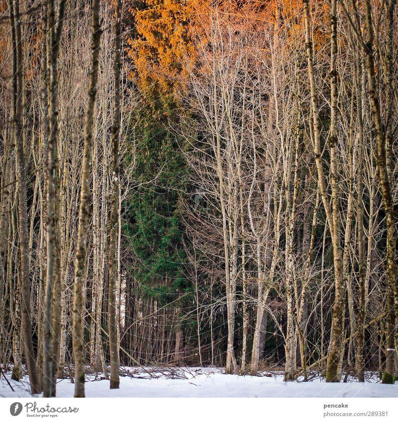 wintersonnenwende Natur grün Baum Landschaft Winter Wald Gefühle Schnee Erde orange Idylle Sehnsucht Glaube Ende Müdigkeit drehen