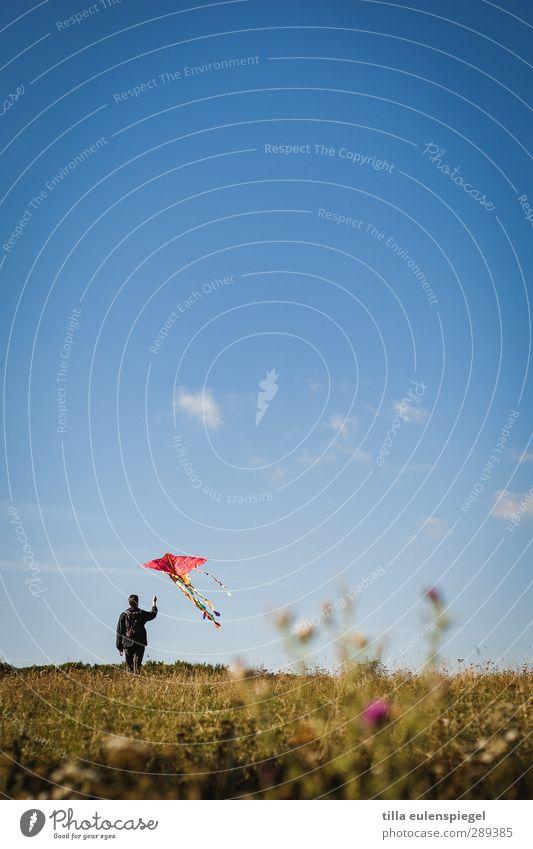 aufsteiger. Freizeit & Hobby maskulin Mann Erwachsene 1 Mensch Himmel Wiese fliegen stehen blau Kindheit Lenkdrachen aufsteigen Abheben Wolken Horizont Farbfoto