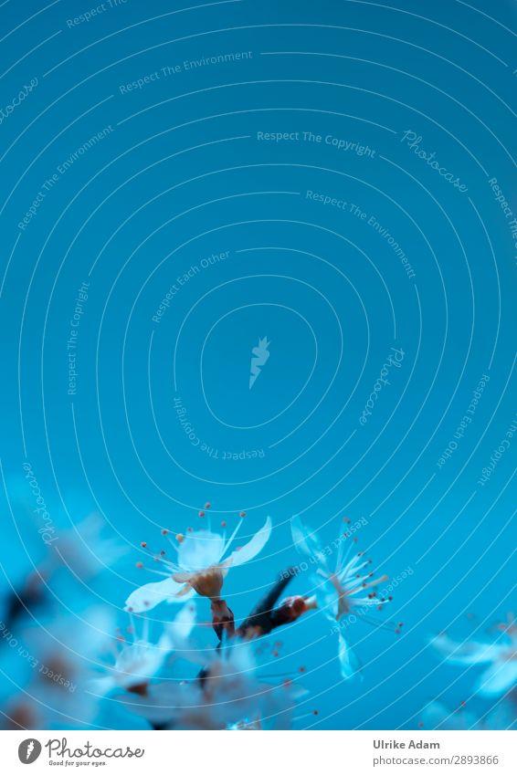 Frühling in Blau Design Wellness Leben harmonisch Wohlgefühl Erholung ruhig Meditation Spa Schwimmbad Dekoration & Verzierung Buchcover Feste & Feiern
