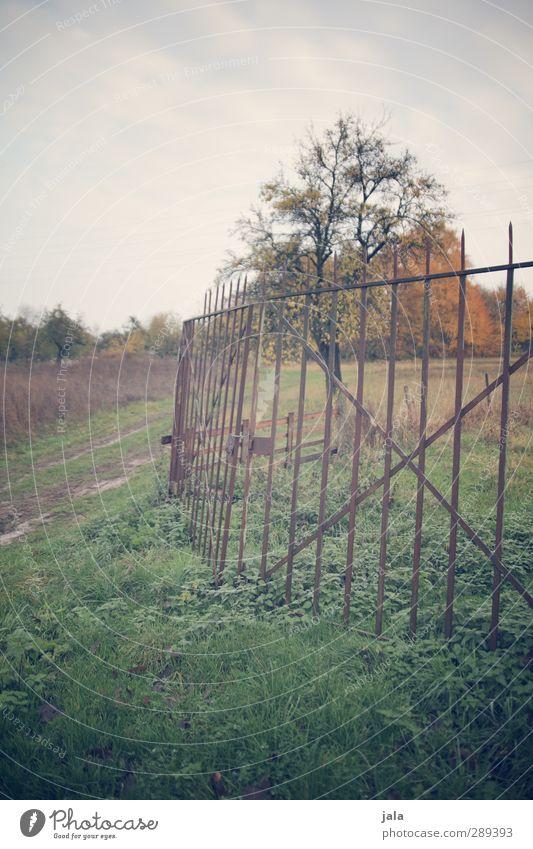 abgrenzung Umwelt Natur Landschaft Pflanze Himmel Herbst Baum Gras Wiese Feld Zaun natürlich Farbfoto Außenaufnahme Menschenleer Tag