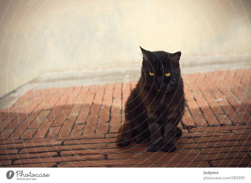 Urlaubsbekanntschaft I Katze Sommer Tier ruhig schwarz Wand Mauer braun natürlich Zufriedenheit elegant warten Italien Neugier Tiergesicht Dorf