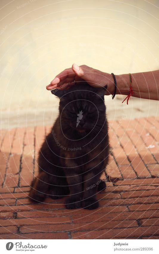 Urlaubsbekanntschaft II Katze Ferien & Urlaub & Reisen Hand Sommer Tier ruhig schwarz Erholung Umwelt Wand Mauer Freundschaft braun Fassade Zufriedenheit Schönes Wetter