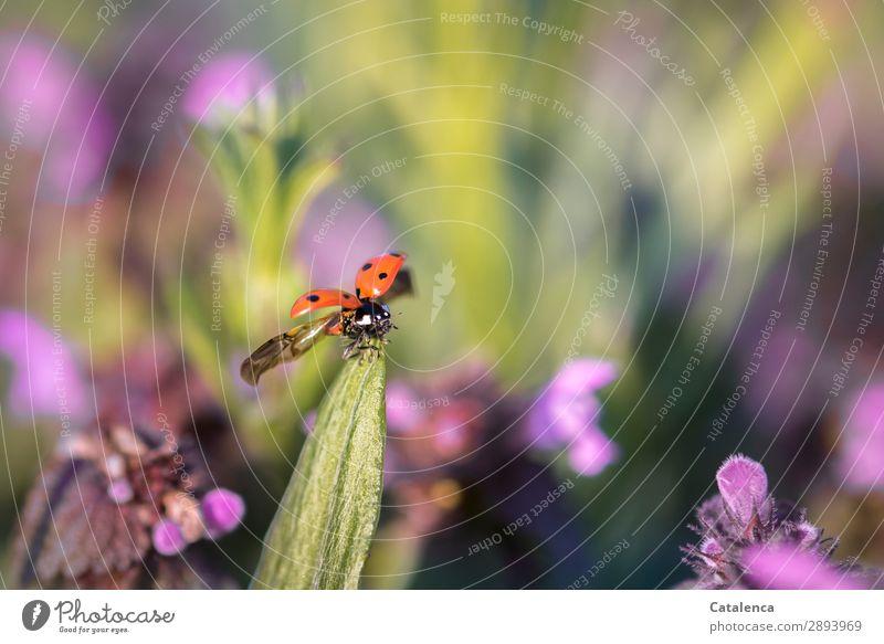 Wegfliegen Natur Pflanze schön grün Blume Tier Blatt Umwelt Blüte Wiese Gras klein Garten orange rosa
