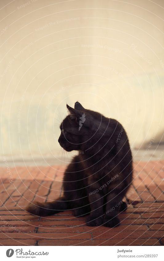 Urlaubsbekanntschaft III Sinnesorgane Erholung Sommer Sommerurlaub moglio Alassio Ligurien Italien Altstadt Mauer Wand Fassade Terrasse Tier Haustier Katze