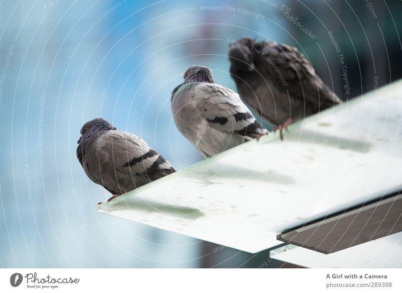 wir bleiben so lange sitzen ...... Tier Zusammensein Wildtier Zufriedenheit Zusammenhalt Taube gleich Tierfamilie