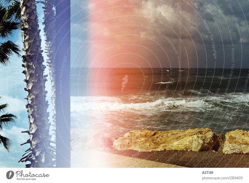 Palmen & Meer Natur Ferien & Urlaub & Reisen alt Sommer Sonne Meer Strand Erholung Ferne Freiheit Schwimmen & Baden träumen Wellen Freizeit & Hobby Insel Idylle
