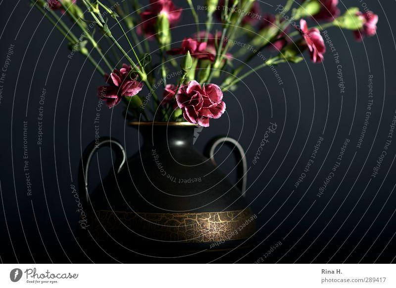 SchnittNelken II für Frau L. rot Blume schwarz Stil gold Dekoration & Verzierung Blühend Blumenstrauß Stillleben Vase Durchschnitt Tragegriff Nelkengewächse