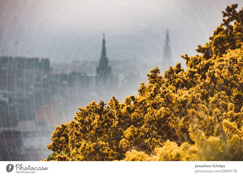 Blick auf Edinburgh im Nebel über Stechginster Ferien & Urlaub & Reisen Natur Pflanze Stadt Landschaft Blume gelb Umwelt Frühling Freiheit wandern ästhetisch