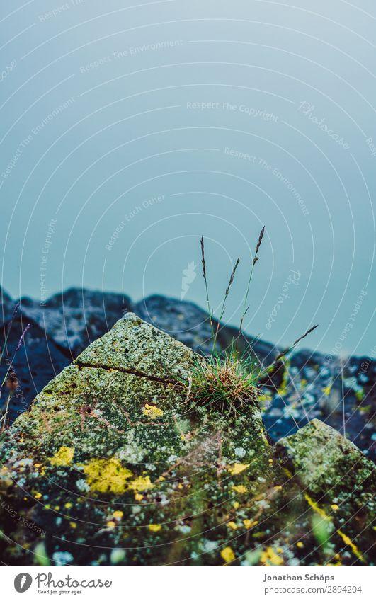 bewachsener Stein auf einem schottischen Berg Ferien & Urlaub & Reisen Pflanze Wärme kalt Tourismus Freiheit wandern Nebel Moos Dunst Schottland Großbritannien