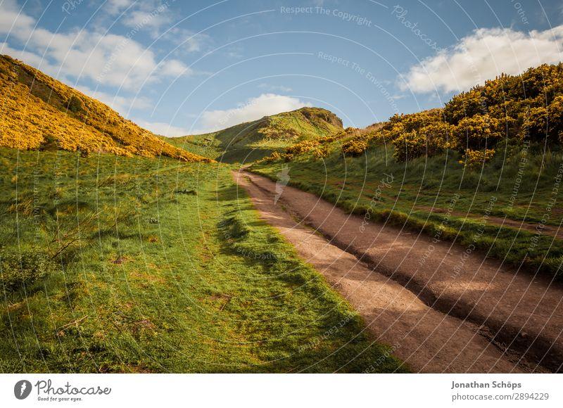 Weg zum Arthur's Seat in Edinburgh Himmel Ferien & Urlaub & Reisen Natur Pflanze Landschaft Sonne Blume Wolken gelb Umwelt Frühling Wege & Pfade Freiheit