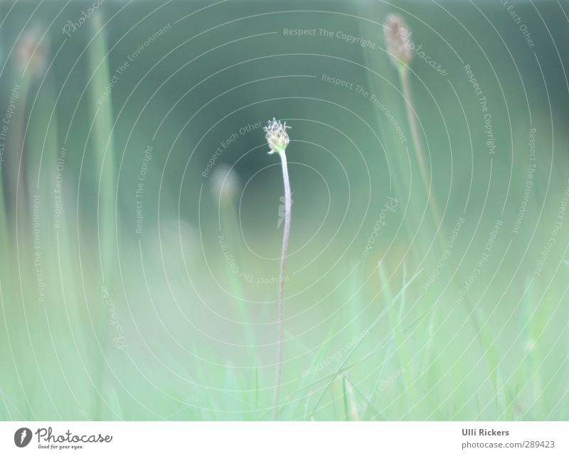 . Natur grün Sommer Pflanze Blume Umwelt Wiese Gras Park Schönes Wetter Sträucher Grünpflanze Frühlingsgefühle