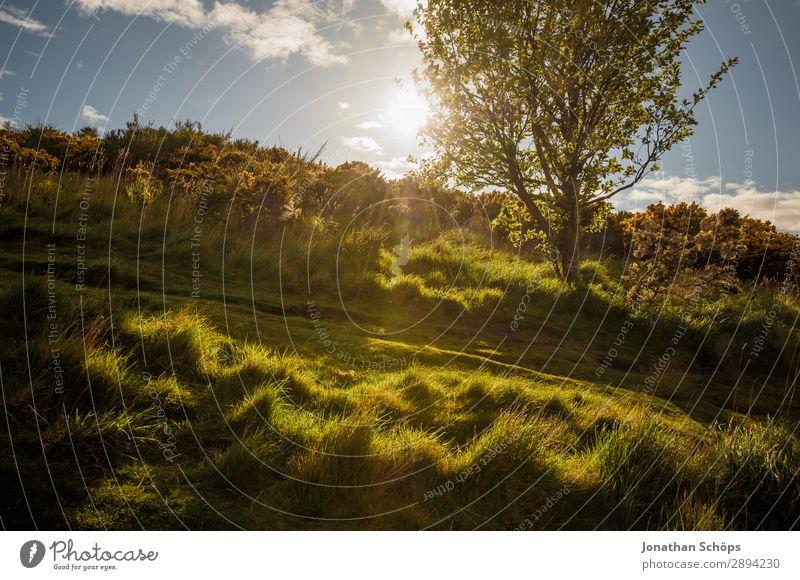Weg zum Arthur's Seat in Edinburgh Himmel Ferien & Urlaub & Reisen Natur Pflanze Landschaft Baum Umwelt Frühling Wege & Pfade Wiese Tourismus Freiheit wandern