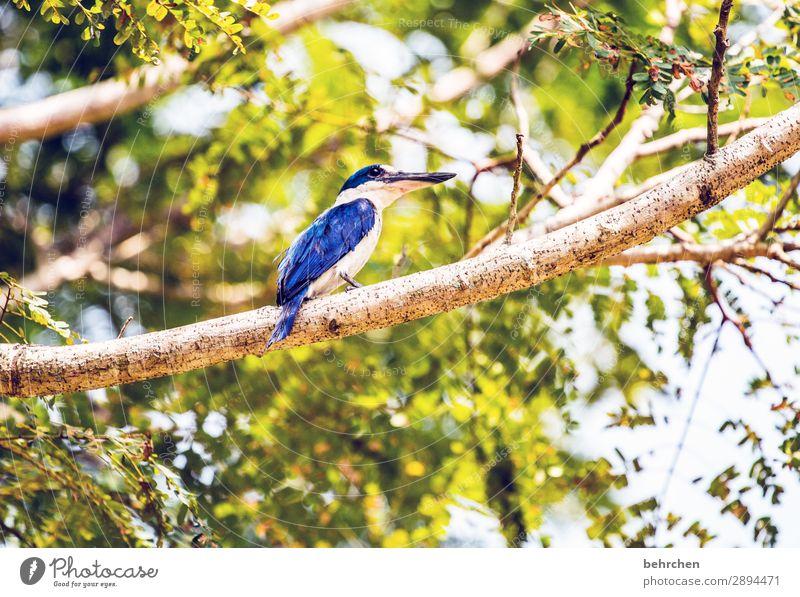 hoch hinaus Ferien & Urlaub & Reisen Pflanze blau grün Baum Blatt Ferne Tourismus außergewöhnlich Freiheit Vogel fliegen Ausflug Wildtier Abenteuer Feder