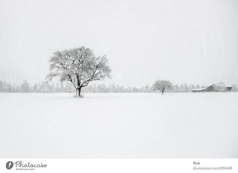 winter Natur Winter Wolken kalt Schnee Schneefall Sturm schlechtes Wetter