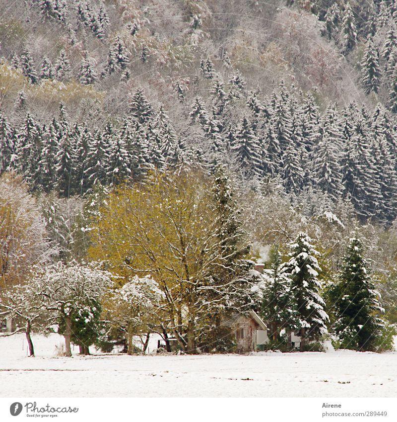 Die Hütte Natur Landschaft Pflanze Winter Schnee Baum Wald Alpen Berge u. Gebirge Menschenleer Holz kalt gelb grün weiß Schutz Geborgenheit ruhig Einsamkeit