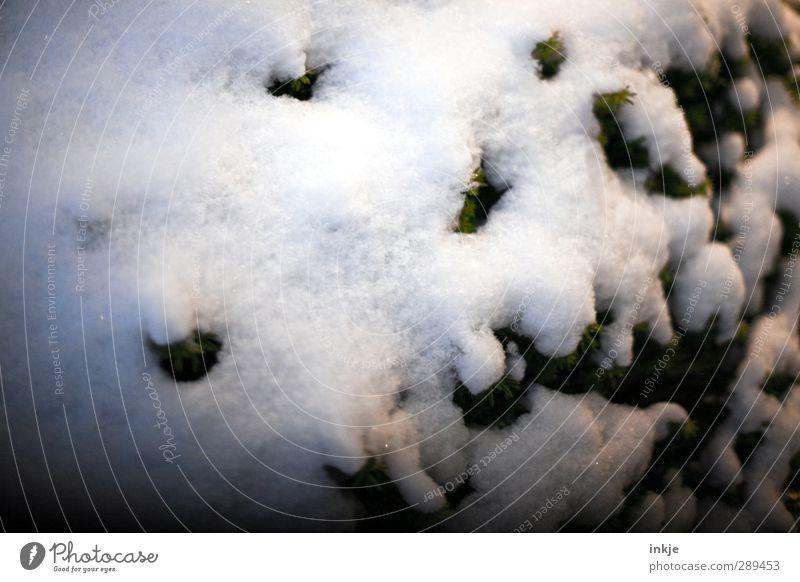 winter Winter Eis Frost Schnee Sträucher weiß Schneedecke kalt Eibe Farbfoto Gedeckte Farben Außenaufnahme Nahaufnahme Detailaufnahme Menschenleer Tag Abend