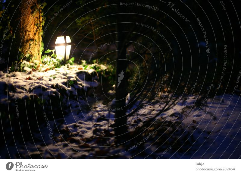 winter Energiewirtschaft Winter Schnee Pflanze Baum Efeu Nadelbaum Garten Park leuchten dunkel Natur Wege & Pfade Außenbeleuchtung Laterne Farbfoto