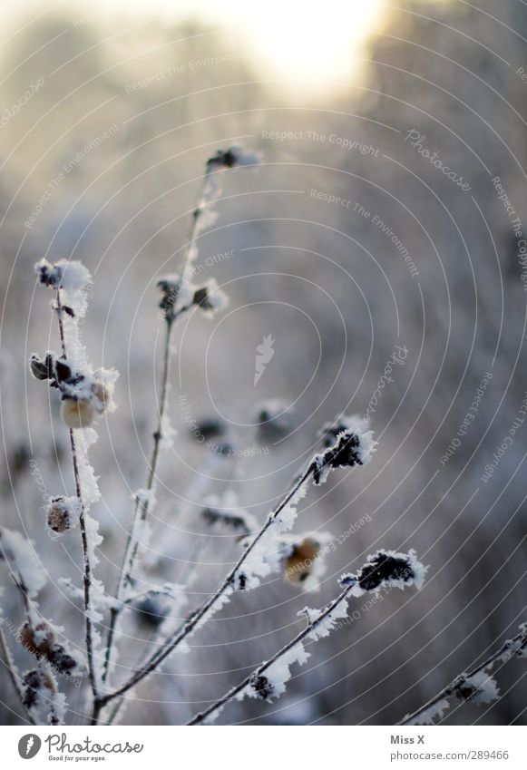 Winter Eis Frost Schnee Sträucher Blatt kalt weiß Beeren Ast Zweig Farbfoto Gedeckte Farben Außenaufnahme Nahaufnahme Menschenleer Schwache Tiefenschärfe