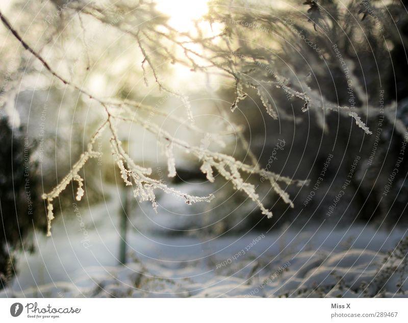 Winter Natur Schönes Wetter Eis Frost Schnee Baum Garten kalt weiß Ast Zweig Raureif Farbfoto Außenaufnahme Menschenleer Morgen Morgendämmerung Licht