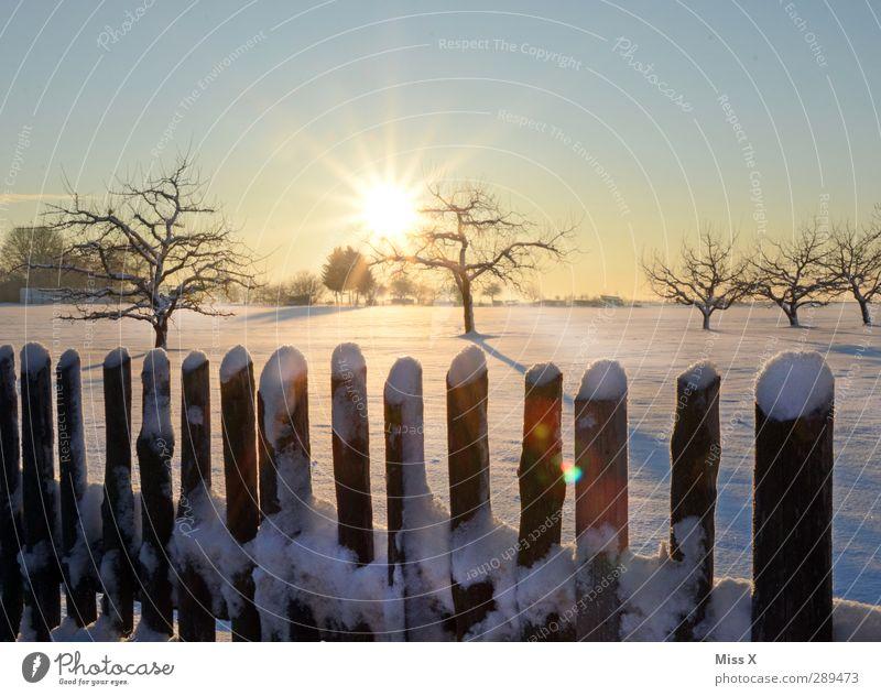 Winter weiß Baum Sonne Winter Landschaft Wiese kalt Schönes Wetter Zaun Wolkenloser Himmel Schneelandschaft