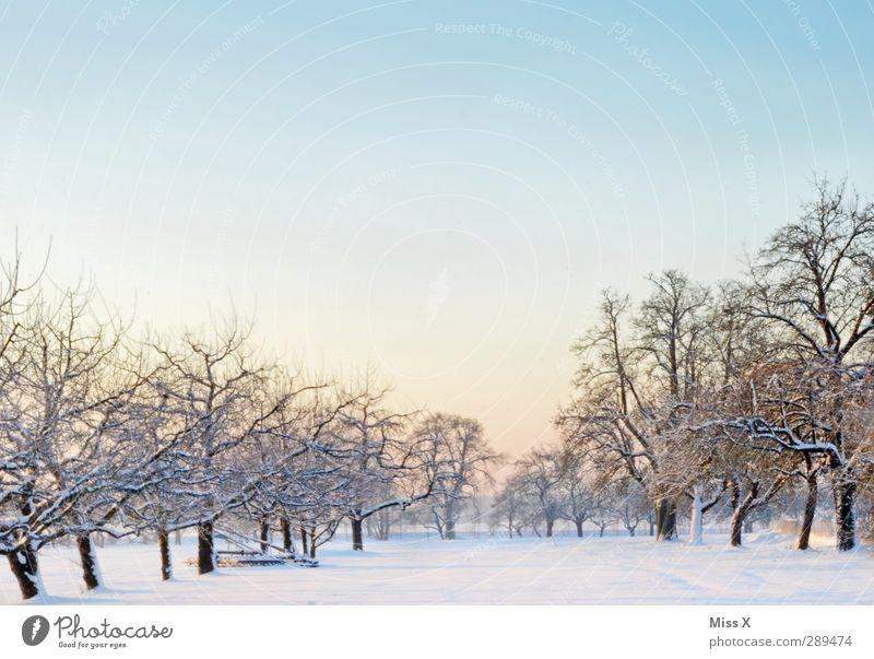 Winter Landschaft Eis Frost Baum Wiese kalt weiß Schneelandschaft Streuobstwiese Wolkenloser Himmel Farbfoto Außenaufnahme Menschenleer Textfreiraum oben Morgen